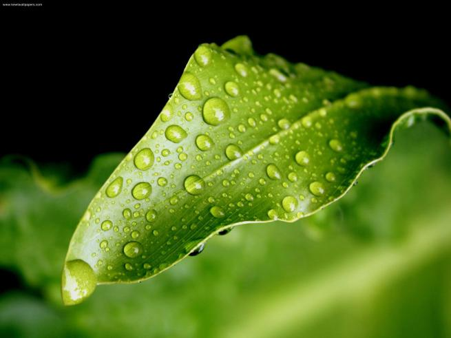 Dew-Drops-Green-Leaf-1
