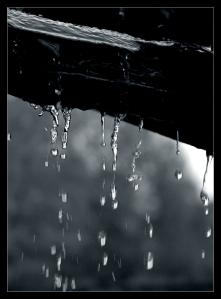 where_rain_grows_by_x_horizon