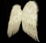wings_05